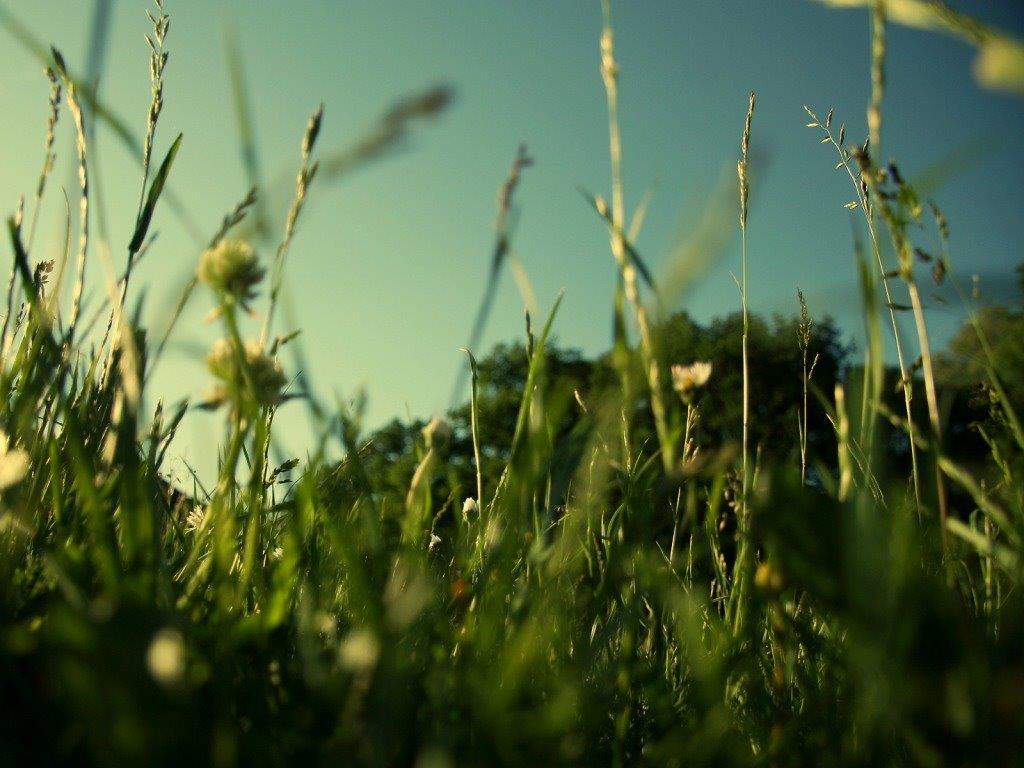Trava U Popodnevno Doba Download Besplatne Pozadine Za
